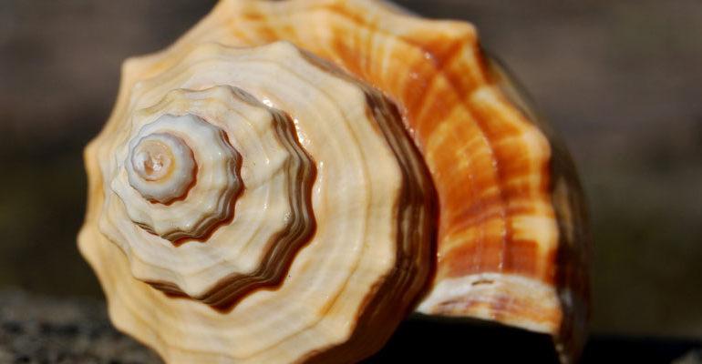 la successione di fibonacci in C